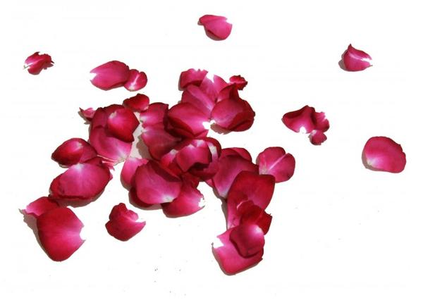 Resultado de imagen para pétalos secos rosas
