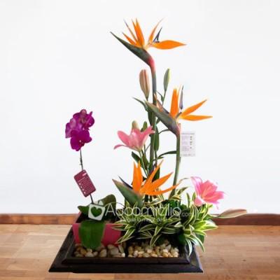 Arreglos Florales A Domicilio En Bogota Arreglo Floral Jardinera Exotico Y Planta De Orquidea